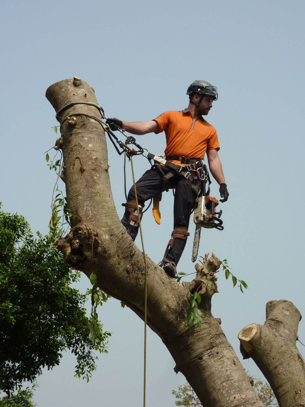 Tree Maintenance and Trimming